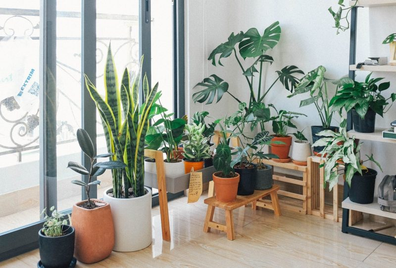 Perfect Plants That Make Your Bedroom or House Attractive